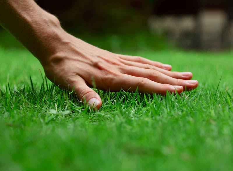 a Sacramento residential is proud to have such a perfect lawn