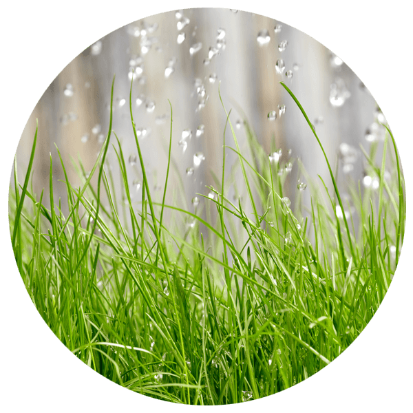 water drops falling on the grass