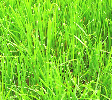 5 Things You Should Never Do to Your Lawn